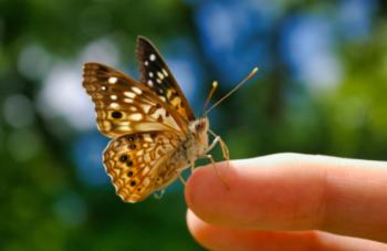 Butterfly landing on a figure